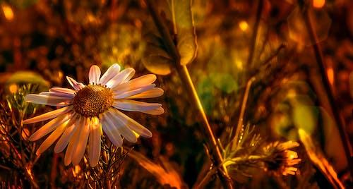 Ilmainen kuvapankkikuva tunnisteilla kasvikunta, kasvu, kirkas, kukat