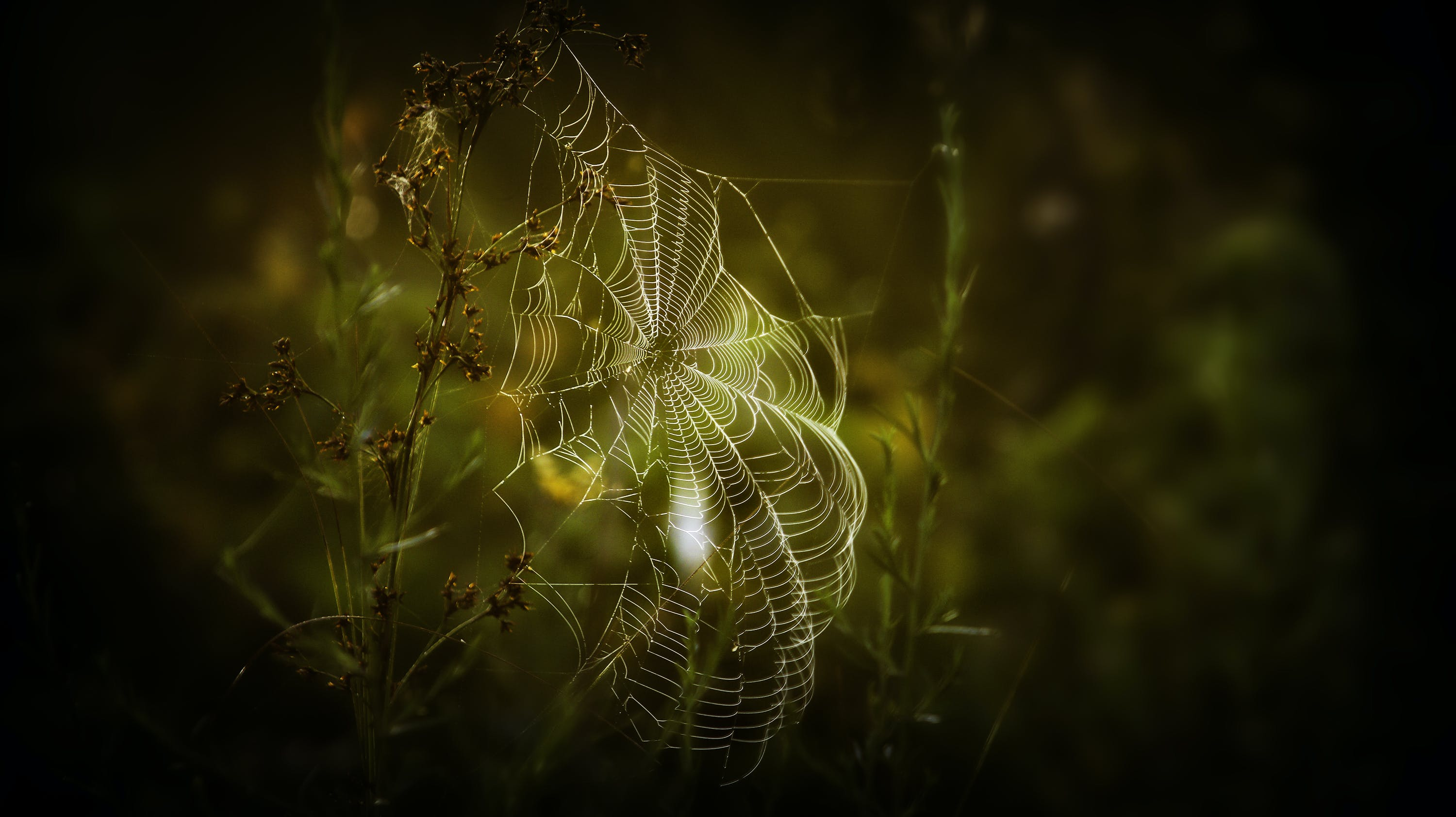 Close-up Photography of Spiderweb