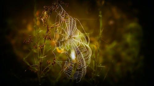 Web, 光, 圖案, 專注 的 免费素材照片