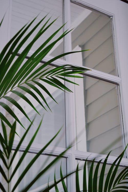 Fotos de stock gratuitas de árbol, palma, plamera