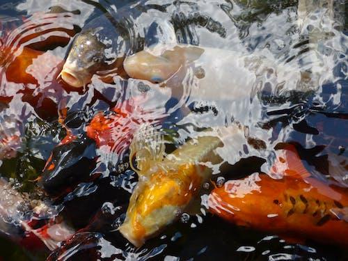 Photos gratuites de poisson
