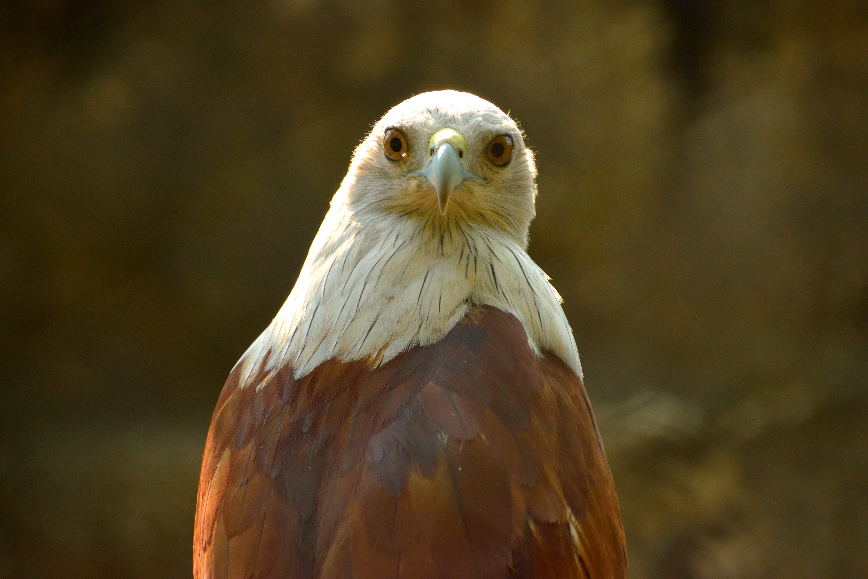 Free stock photo of bird, bird watching, bird's eye view