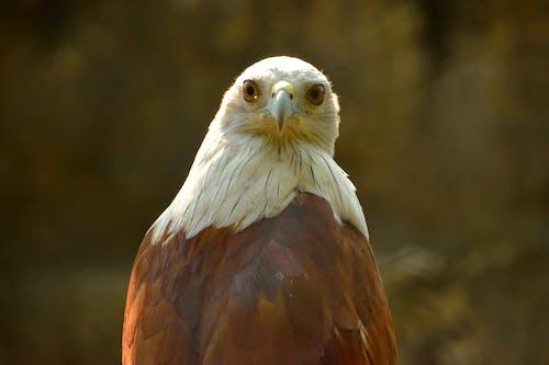 Ingyenes stockfotó madárles, madártávlat témában