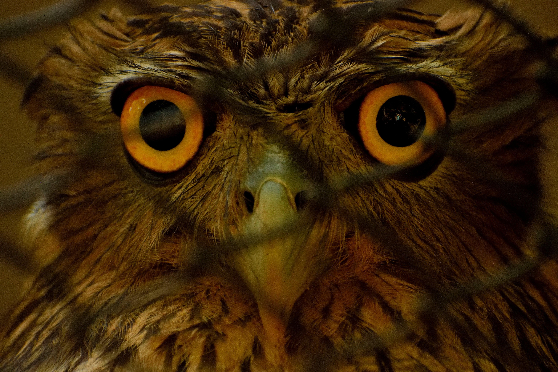 Kostenloses Stock Foto zu eule, vogelperspektive