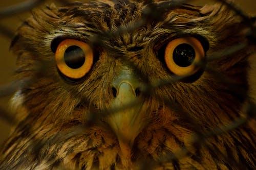 Ingyenes stockfotó bagoly, madártávlat témában