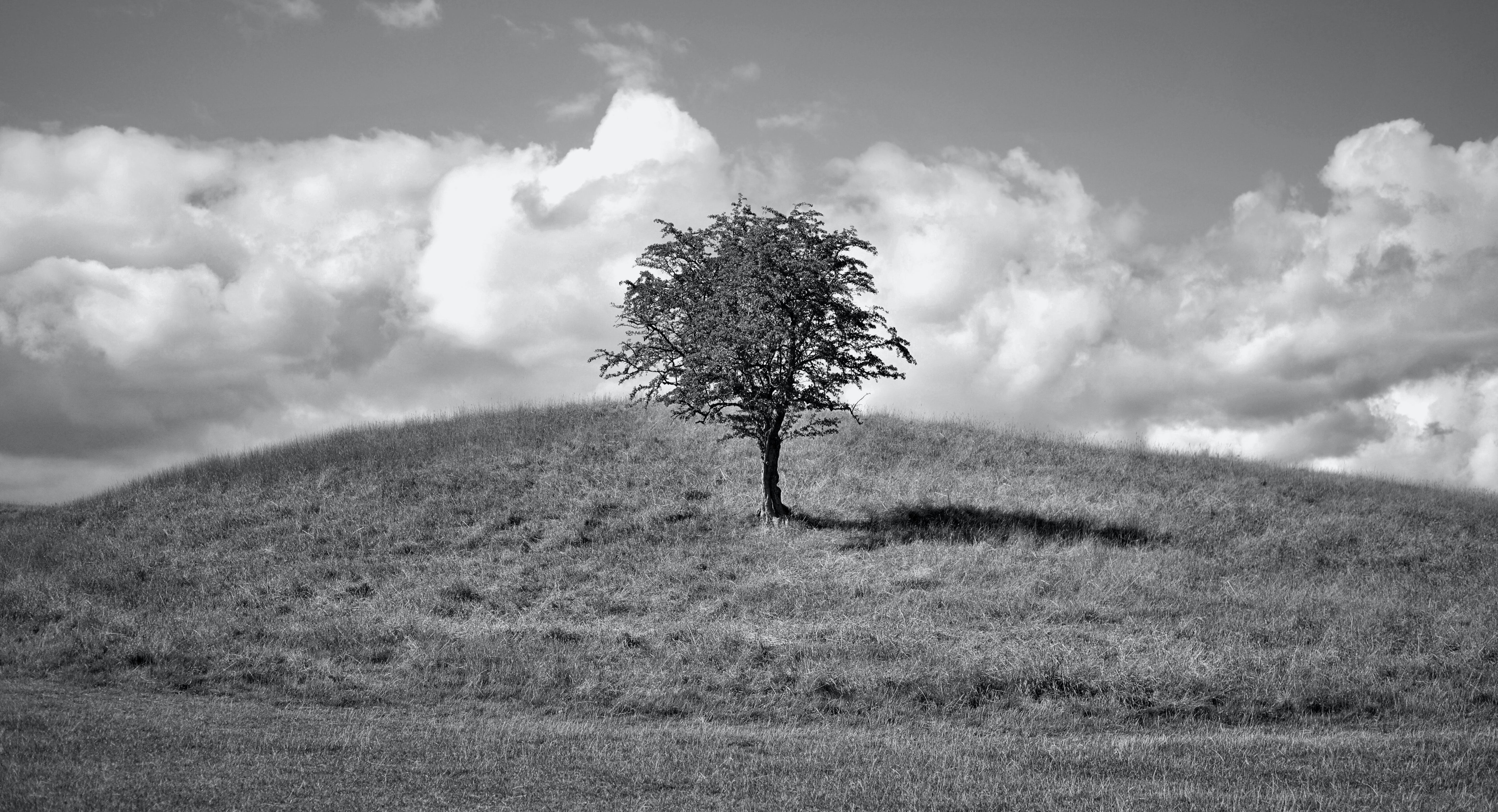 Monochrome Photo of a Tree on Hill