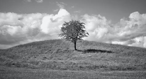 Gratis arkivbilde med ås, fredelig, gråskala, gress