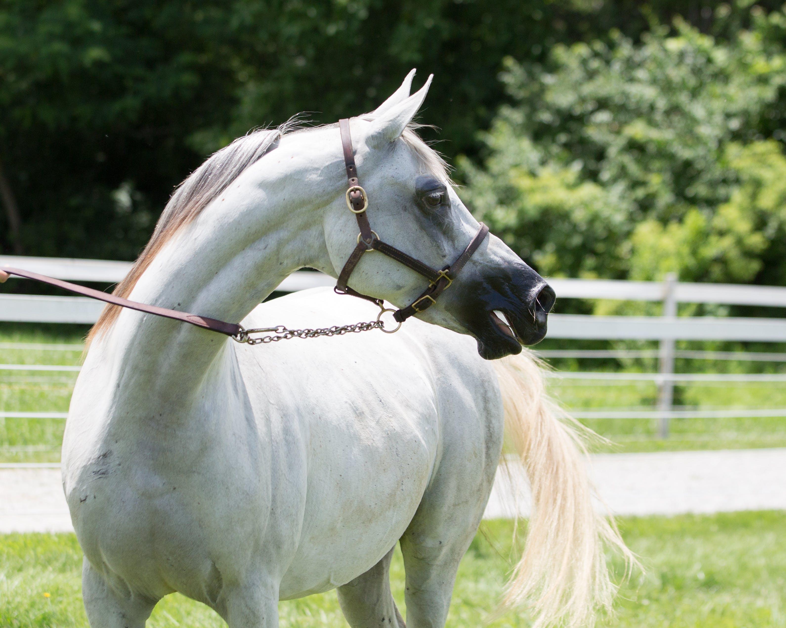 White Horse On Grass Field