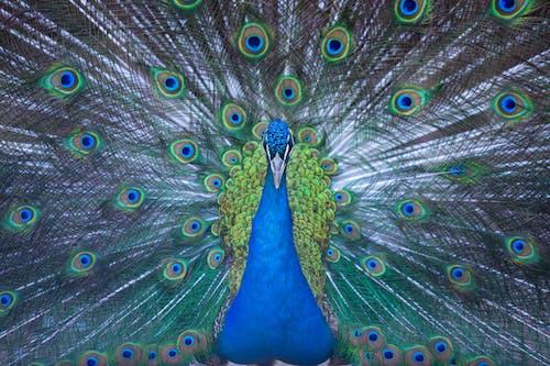 Fotos de stock gratuitas de animal, estampado, fauna, fondo de pantalla gratis