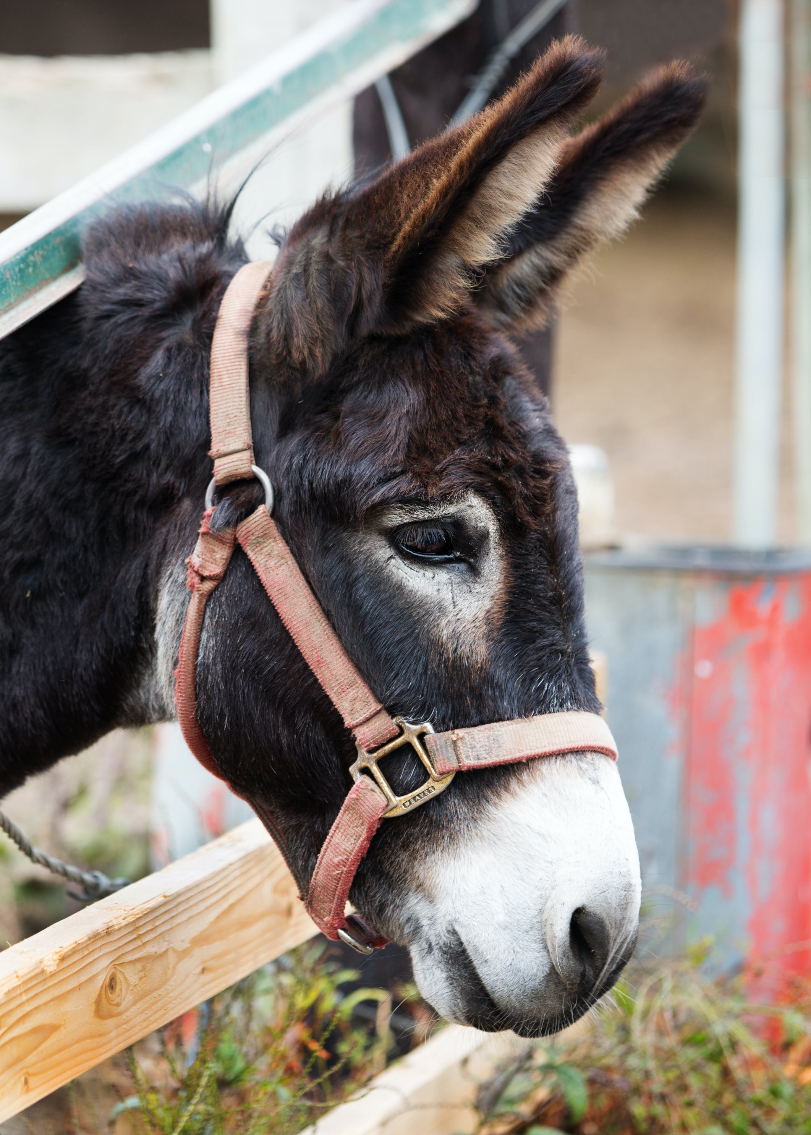 Black Donkey Behind Brown Cage