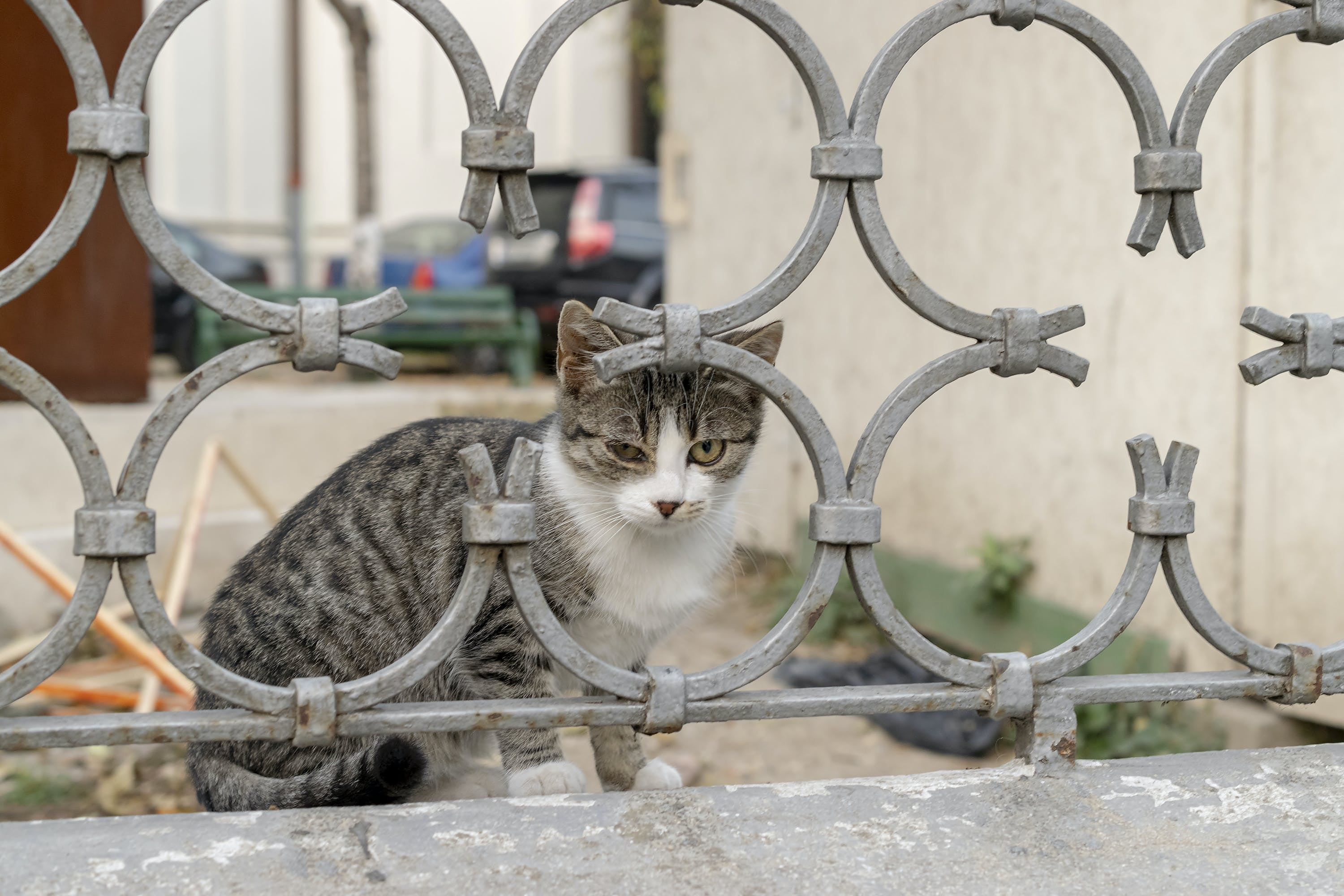 Free stock photo of cat after a metal fence, street photography