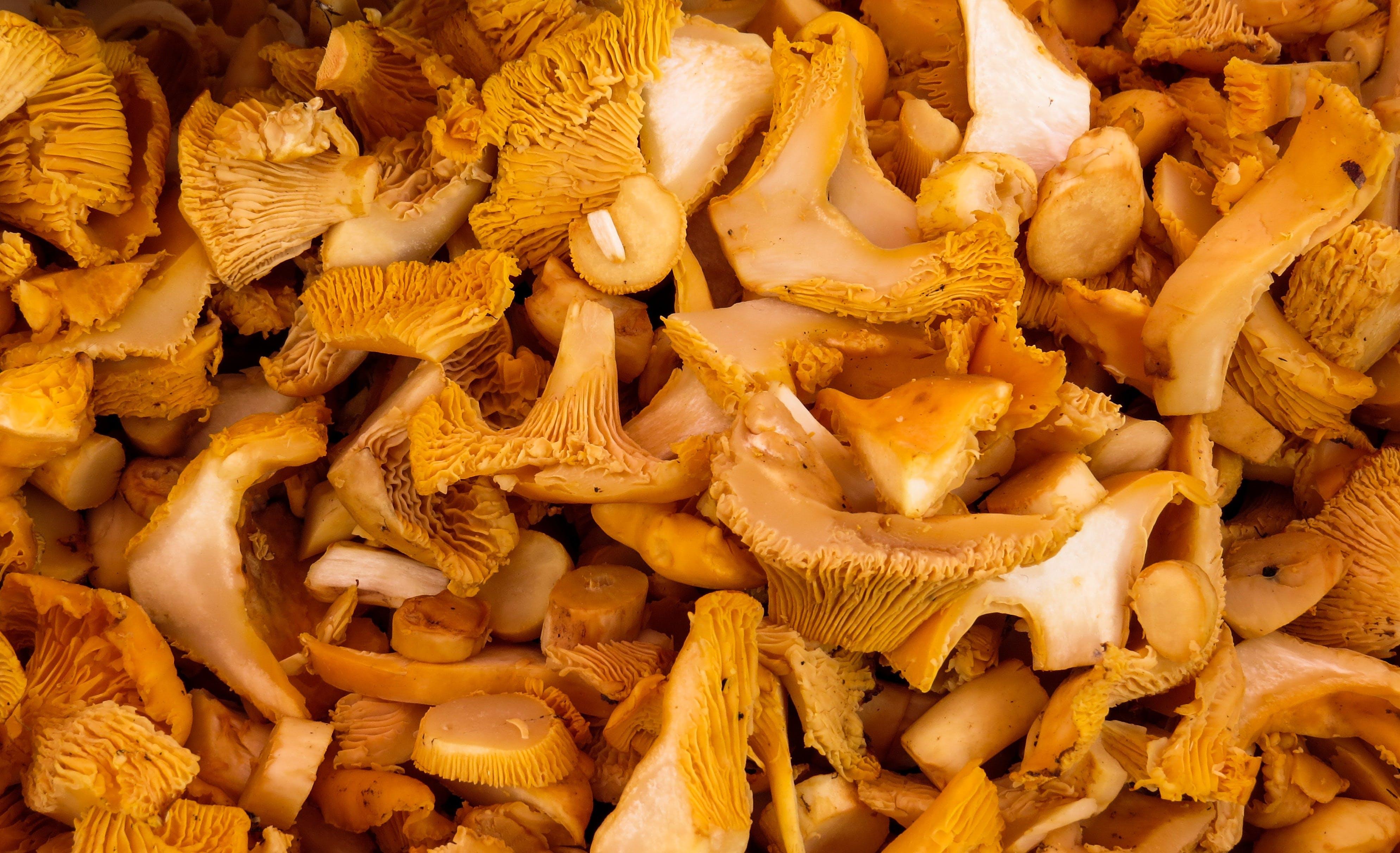 Free stock photo of autumn, chanterelles, collect, eat
