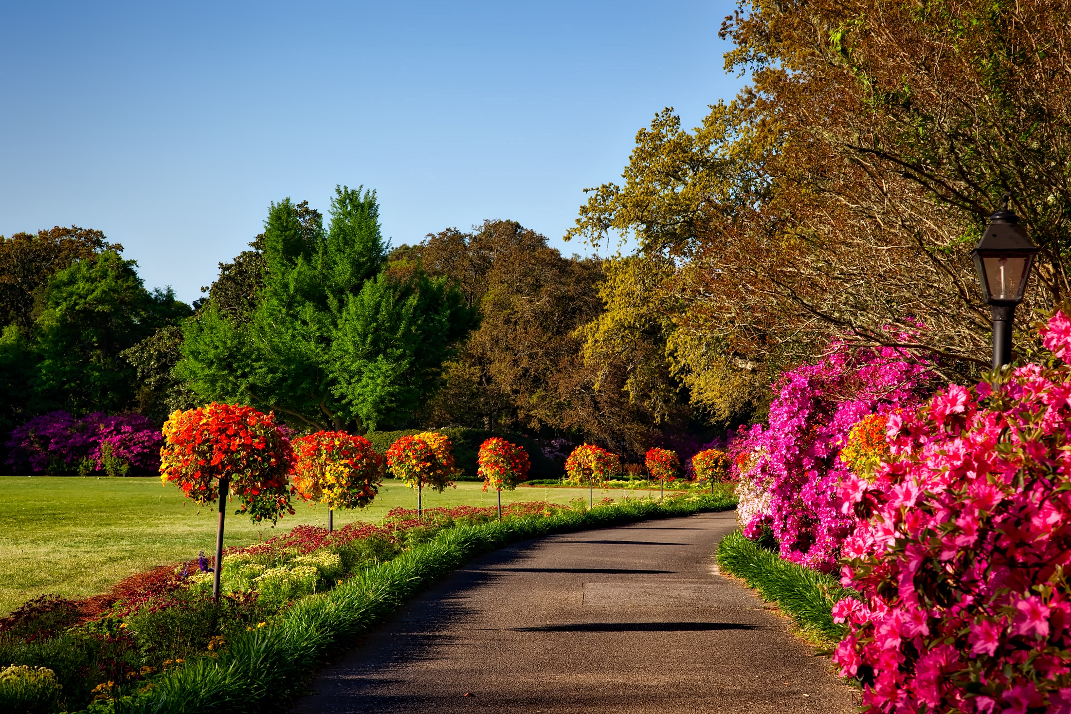 1000 Amazing Flower Garden Photos