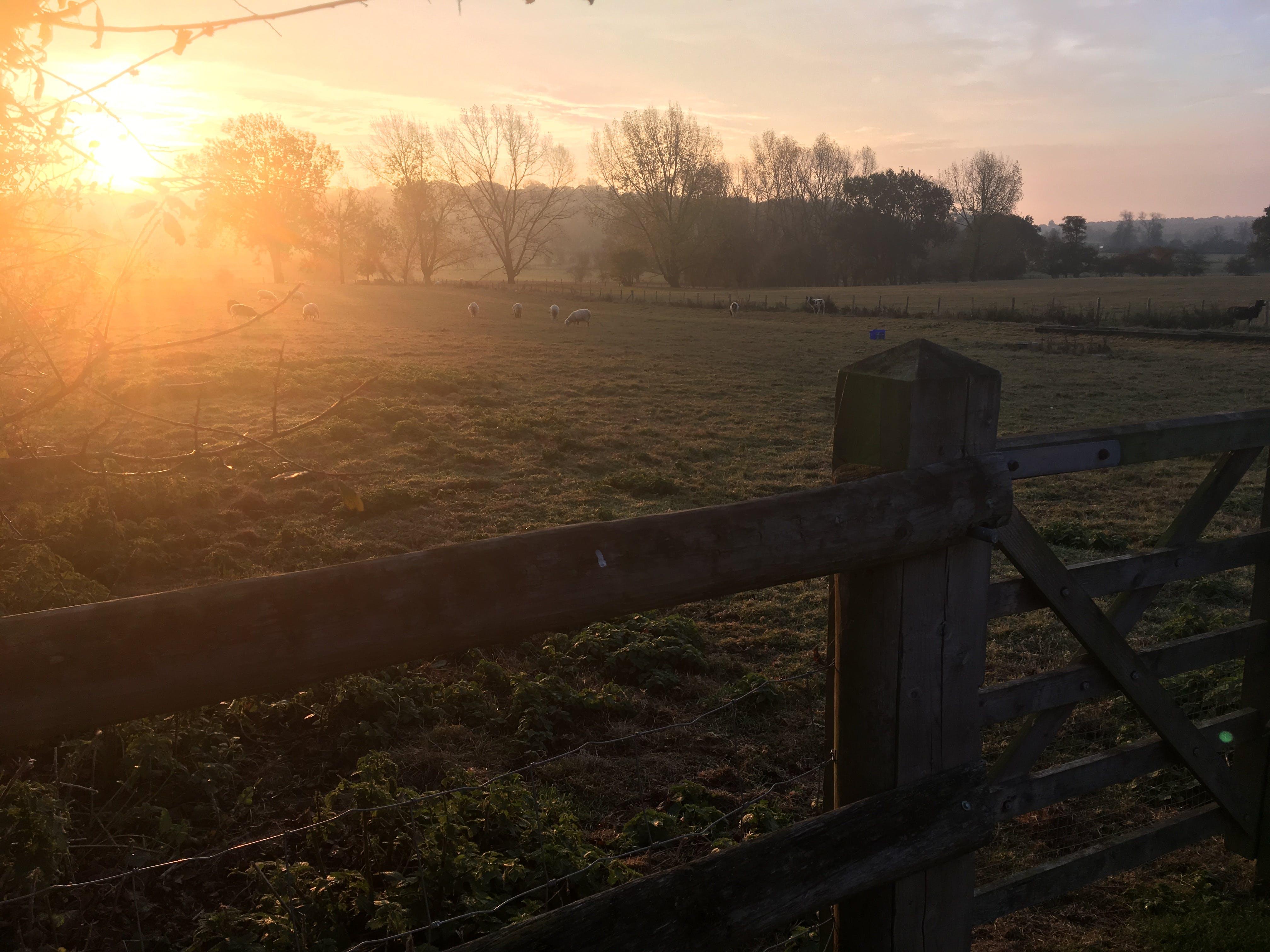 Free stock photo of fields, sunrise