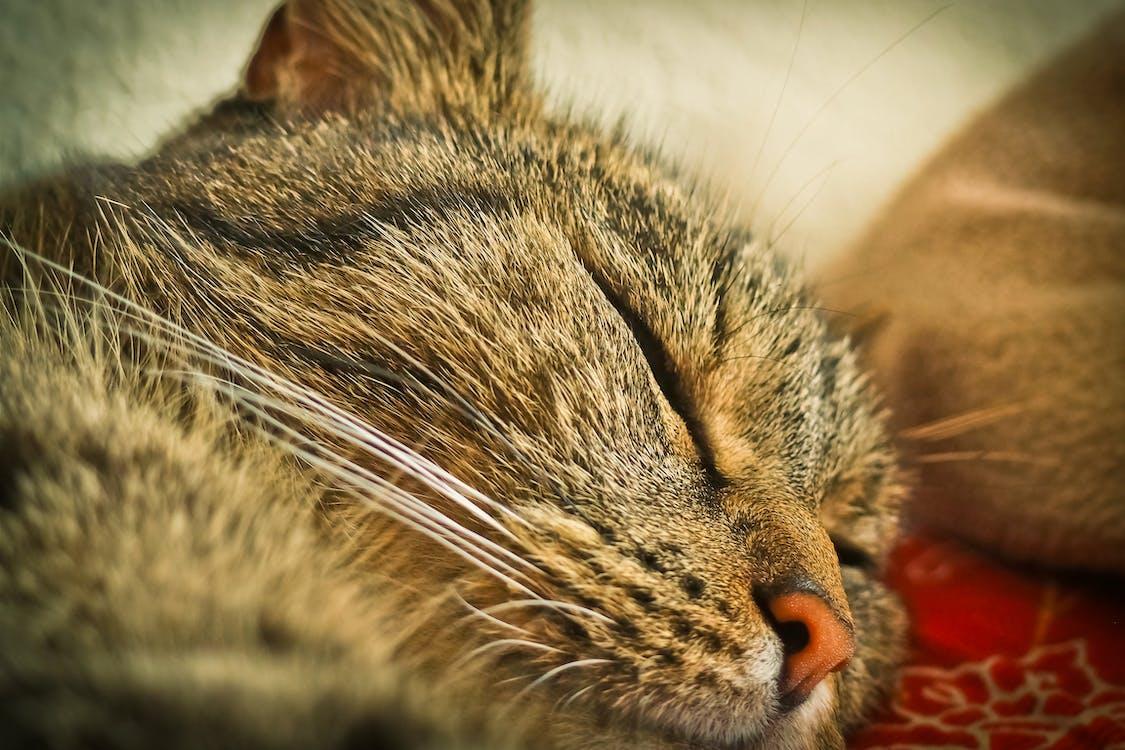 고양이, 고양이 얼굴, 고양잇과