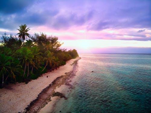 Foto d'estoc gratuïta de capvespre, llacuna, pacífic, palmeres