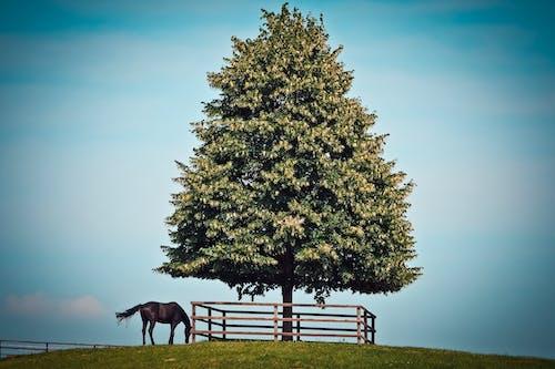 Foto d'estoc gratuïta de animal, arbre, blau, camp