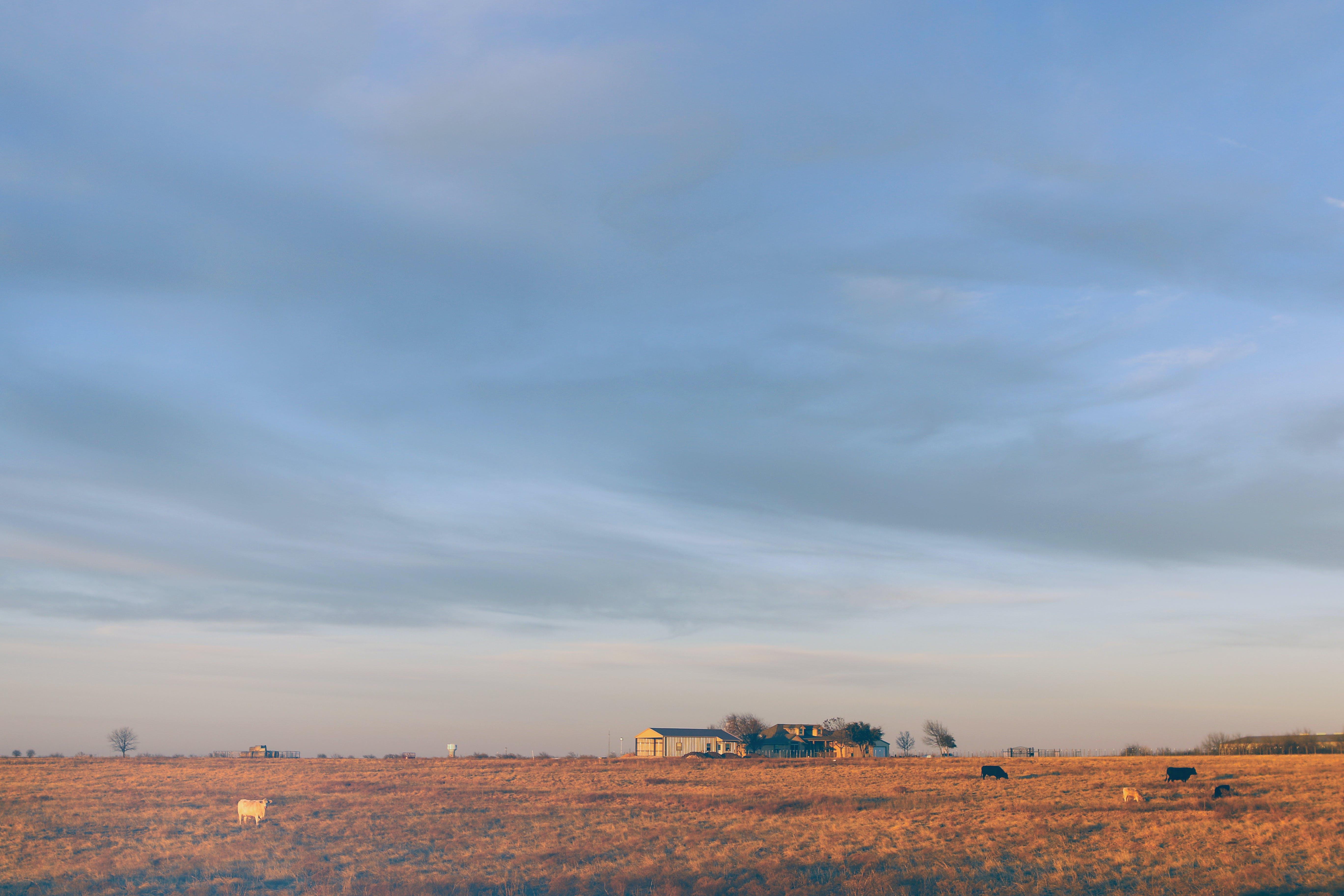 Ingyenes stockfotó ég, farm, mező, napfény témában