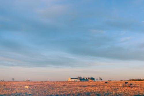 Ilmainen kuvapankkikuva tunnisteilla kenttä, maatila, päivänvalo, taivas