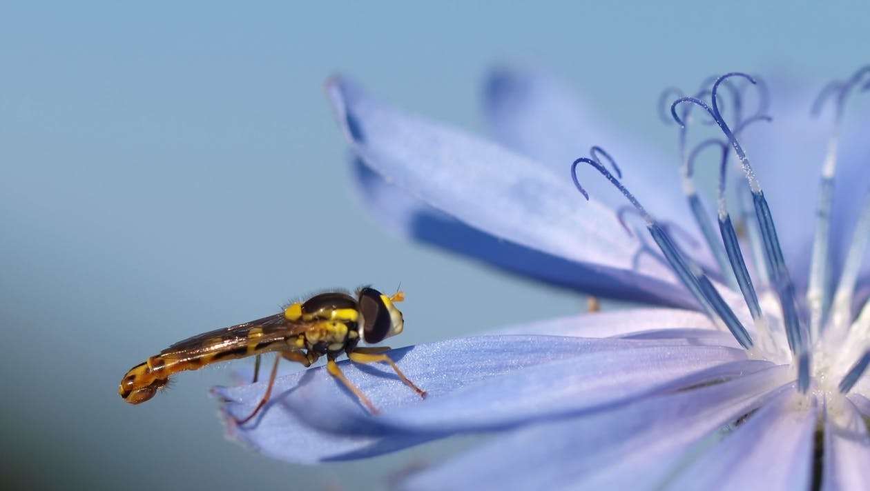 Black and Yellow Dragon Fly on Purple Flower