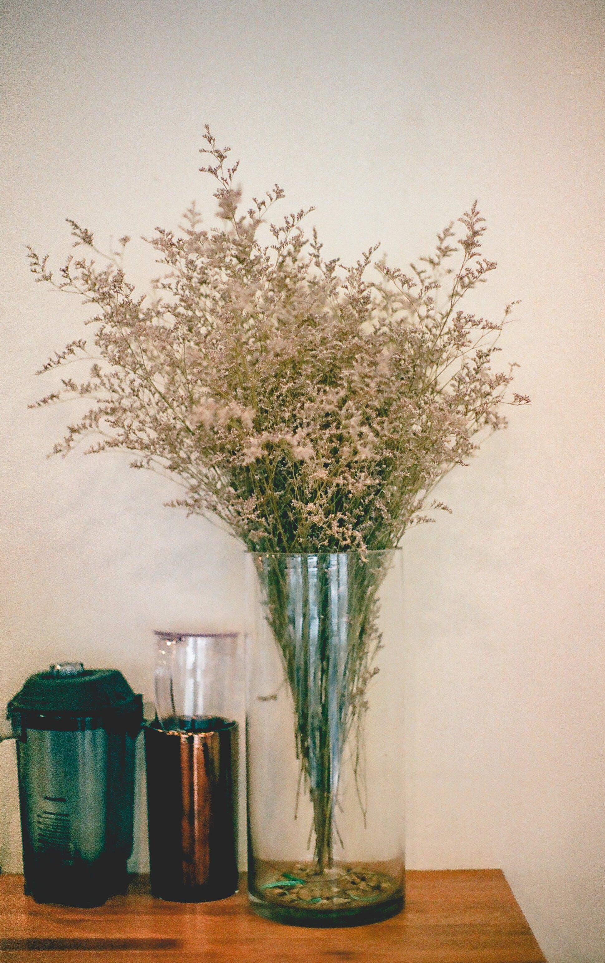 Kostenloses Stock Foto zu blumen, dekor, dekoration, flora