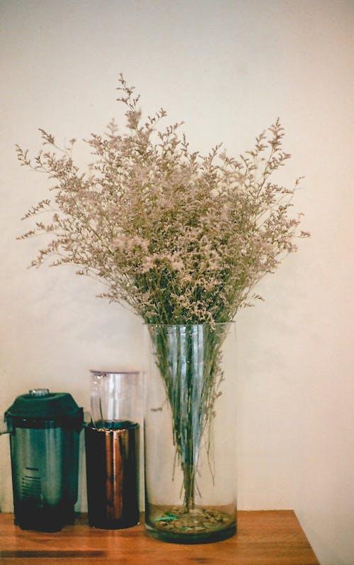 Foto profissional grátis de decoração, flora, flores, planta