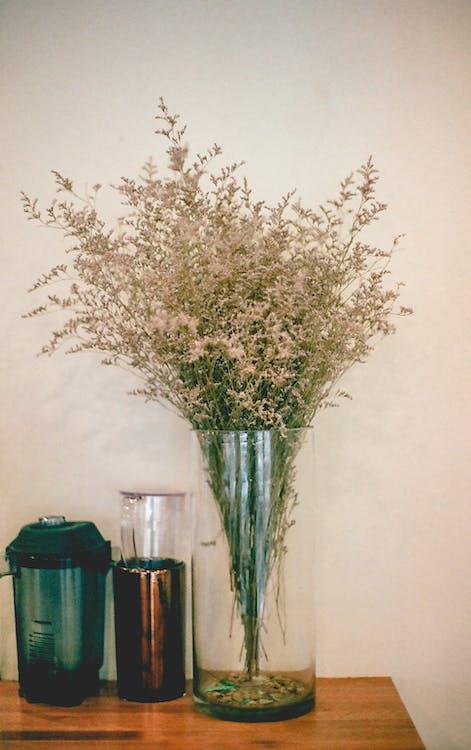 decoração, flora, flores