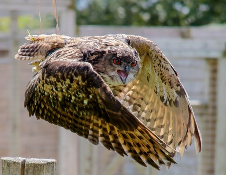 Brown and Beige Serpent Owl in Timelapse Photography