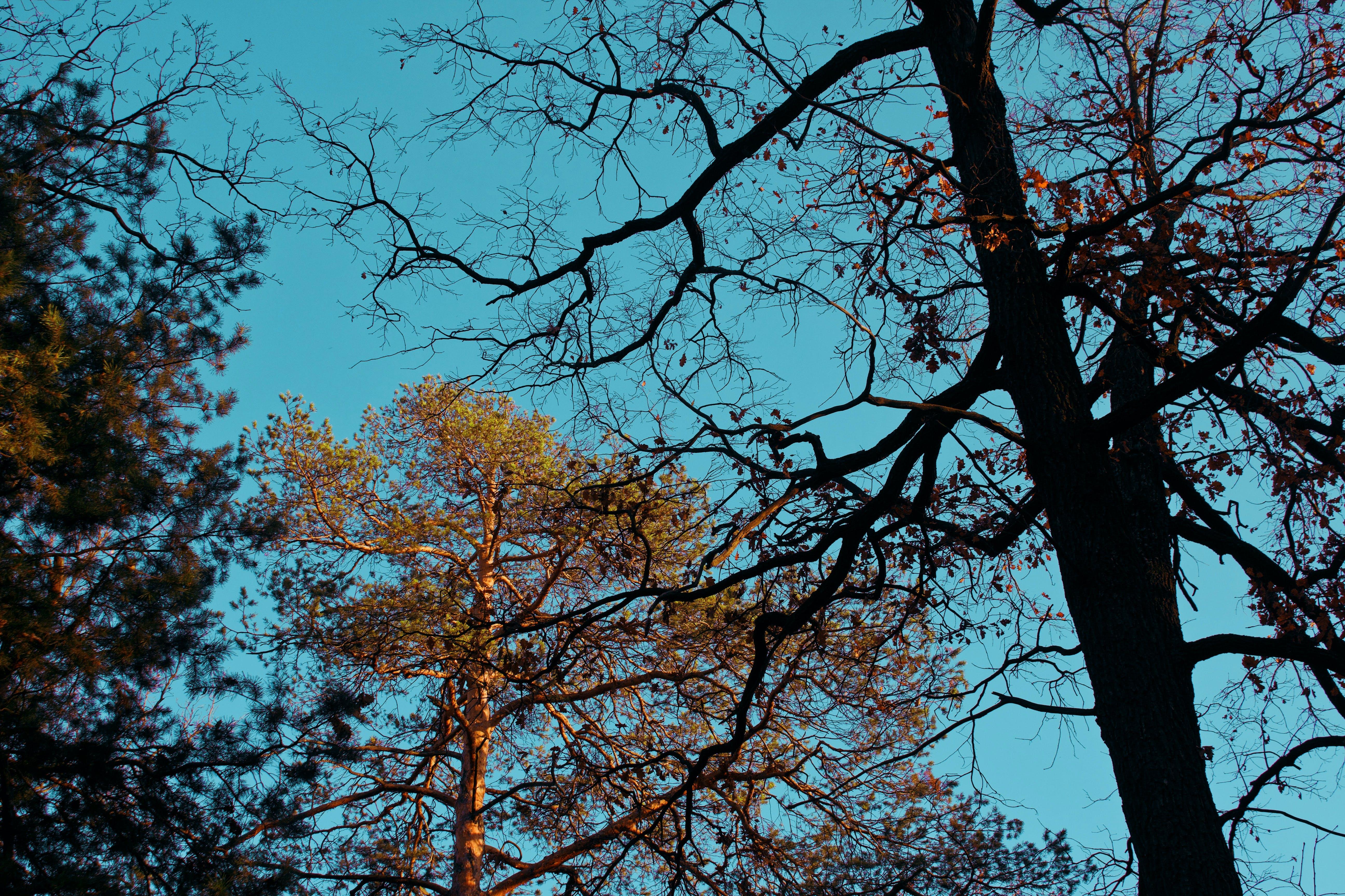 Základová fotografie zdarma na téma perspektiva, příroda, stromy, větve