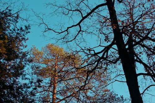Fotos de stock gratuitas de arboles, foto de ángulo bajo, naturaleza, perspectiva