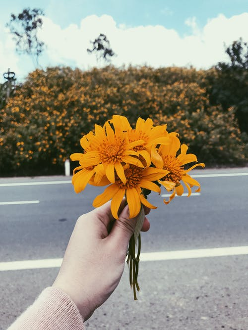 Person Holding Orange Sunflower Flowers