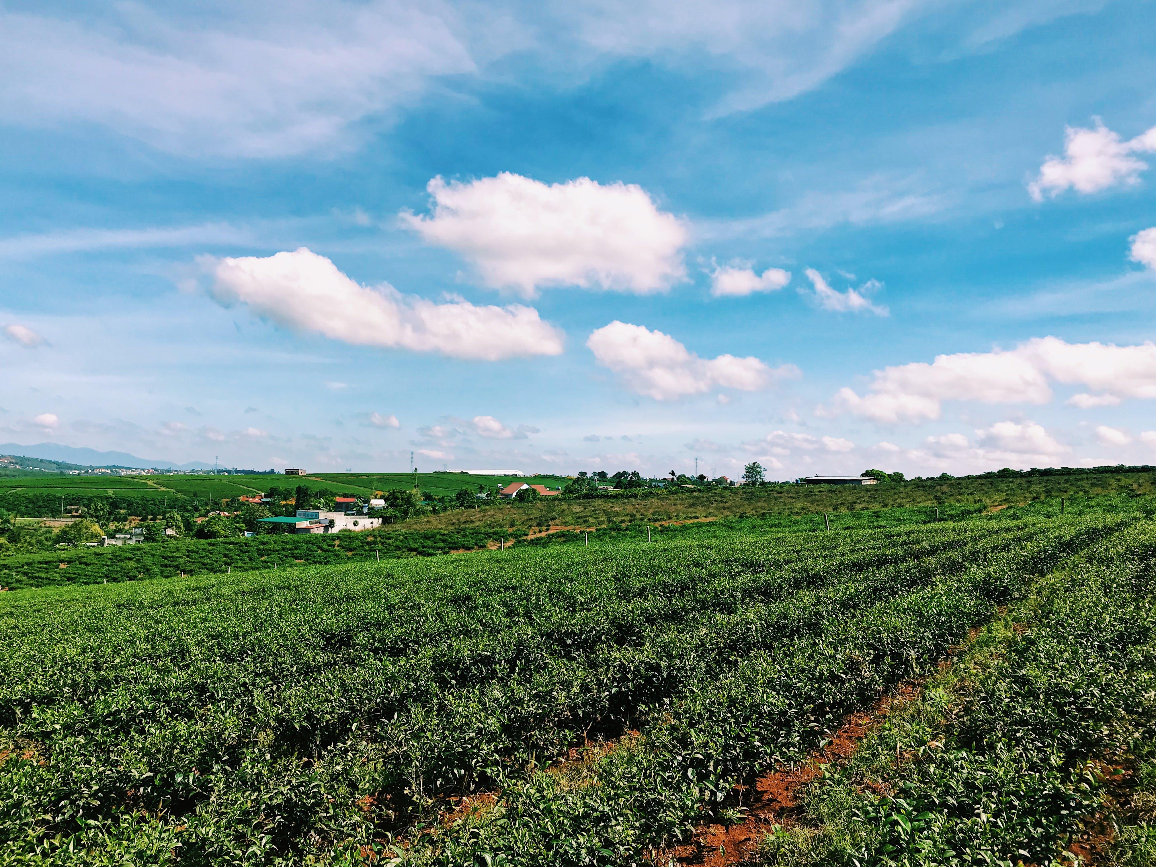 Foto profissional grátis de área, céu, chácara, colheita