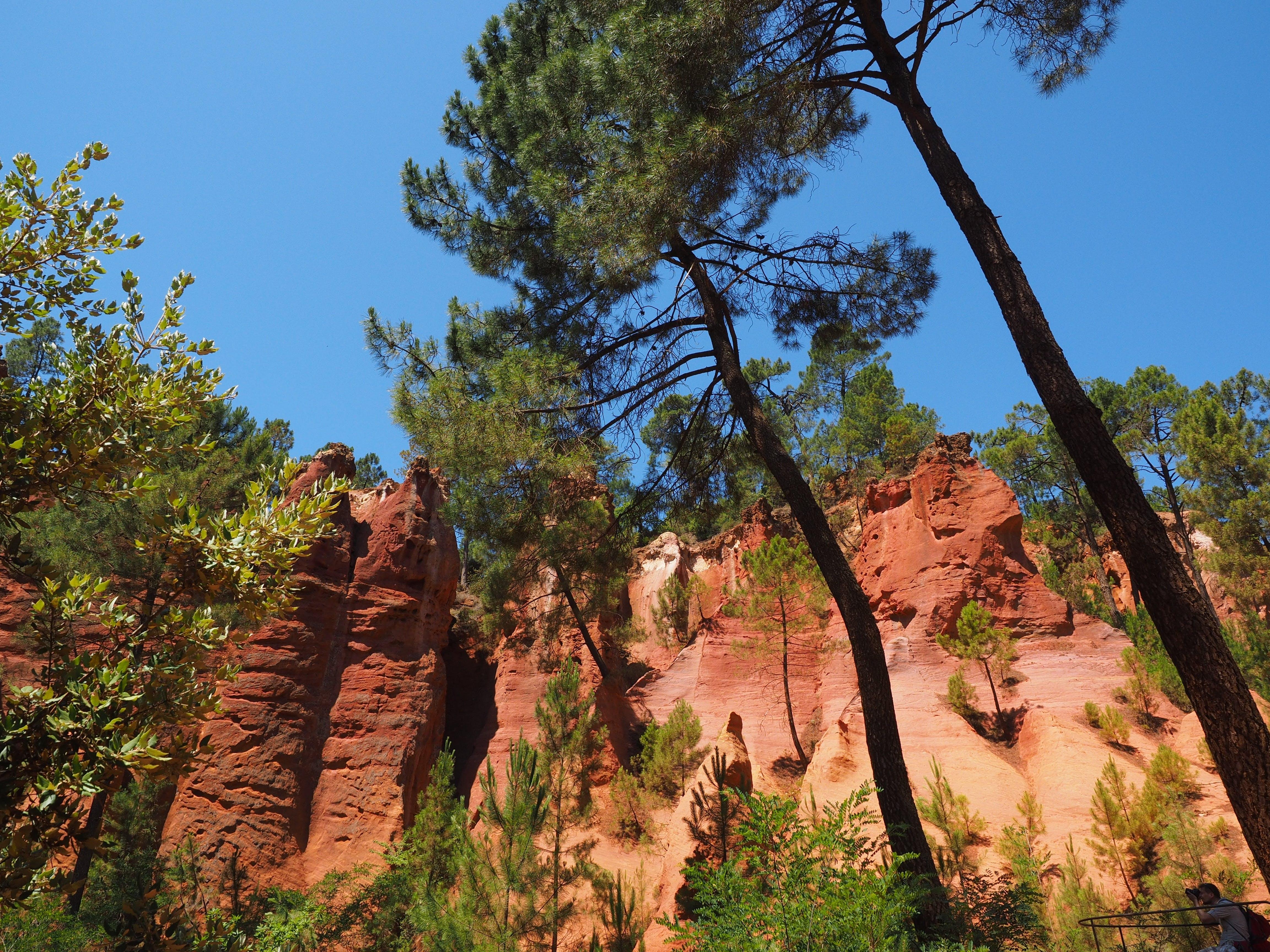 Tall Tree Near Cliff