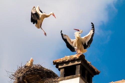 Gratis stockfoto met beesten, dak, dieren, dieren in het wild