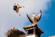 roof, animals, birds