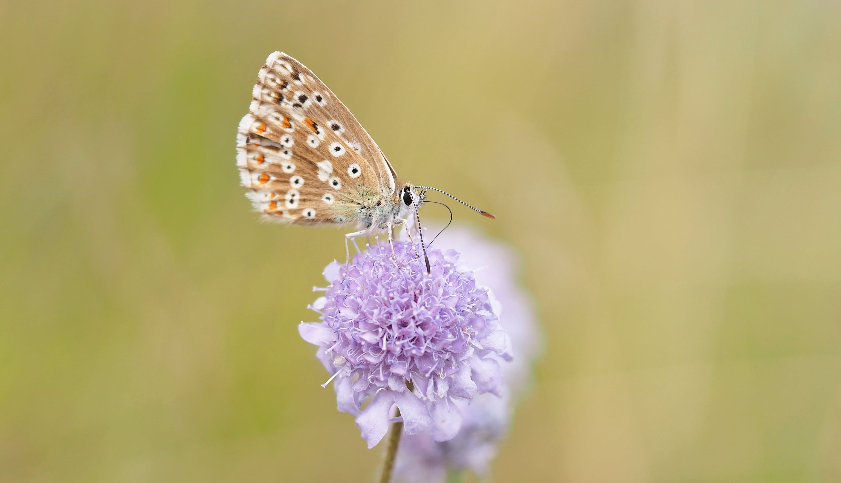 Close Up Photography of Blue Butterfly on Purple
