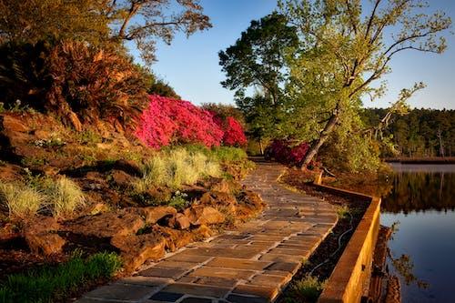 คลังภาพถ่ายฟรี ของ งดงาม, ดอกไม้, ต้นไม้, ทางเดิน