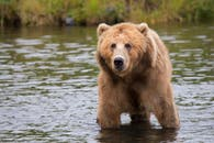 Bear Images