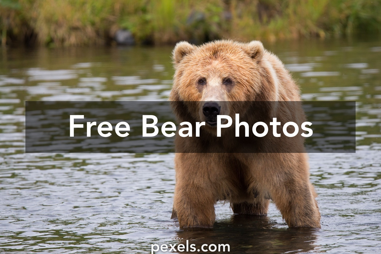 Bear films free