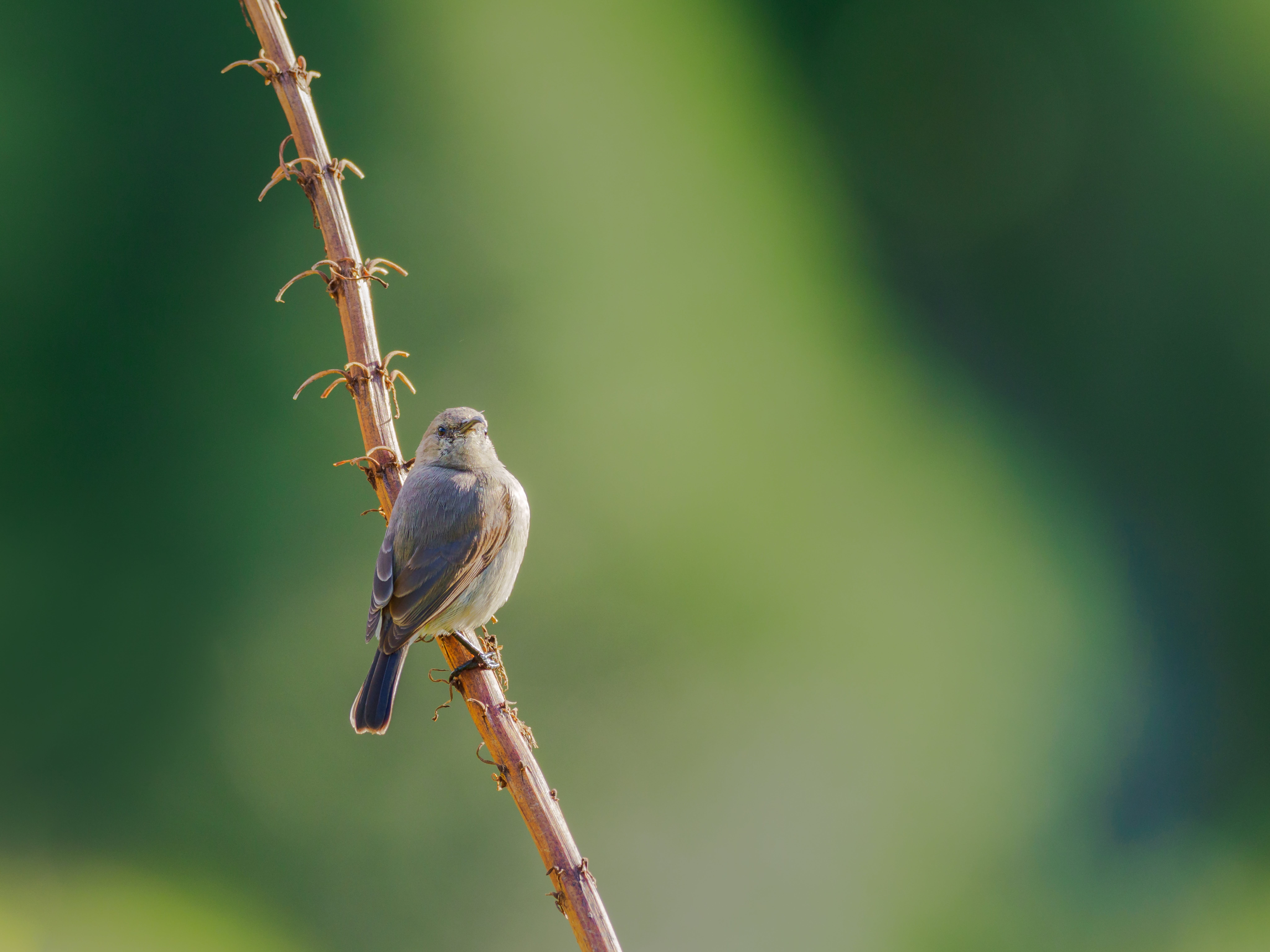 Selective Focus Photography of Gray Bird Perching on Branch