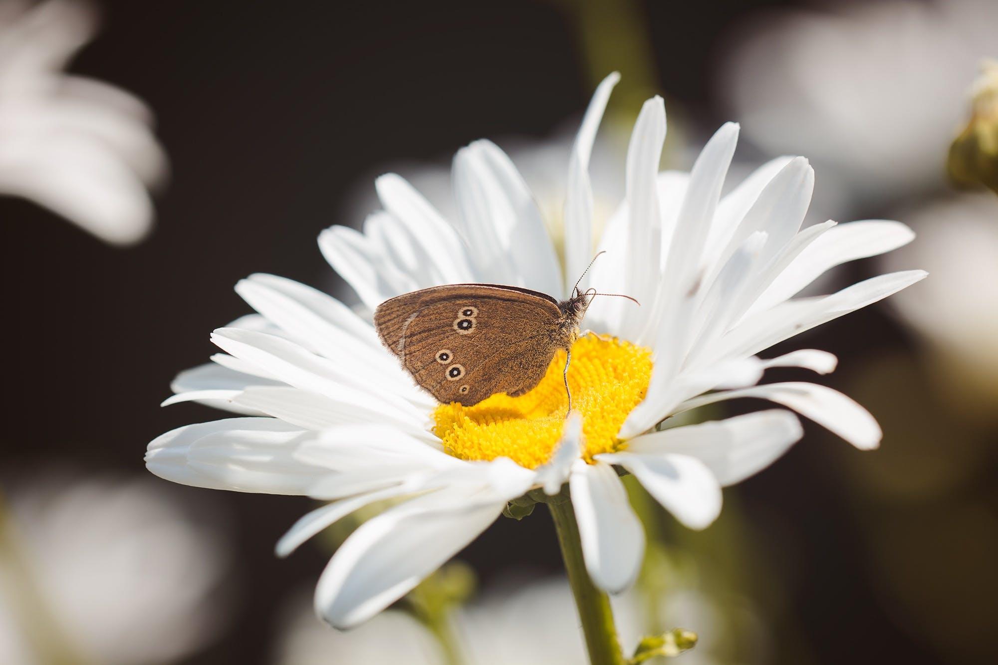 Free stock photo of summer, garden, animal, pollen