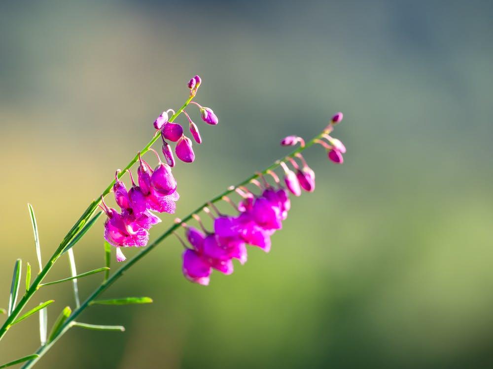 blomst, blomster, blomsterblad