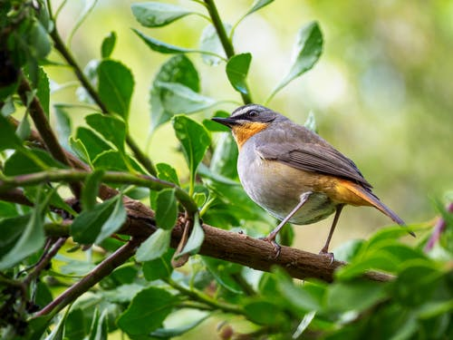 Selective Focus Photography of Bird Perching on Branch