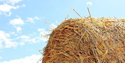 Imagine de stoc gratuită din activități agricole, arid, baloți de fân, baloți de paie
