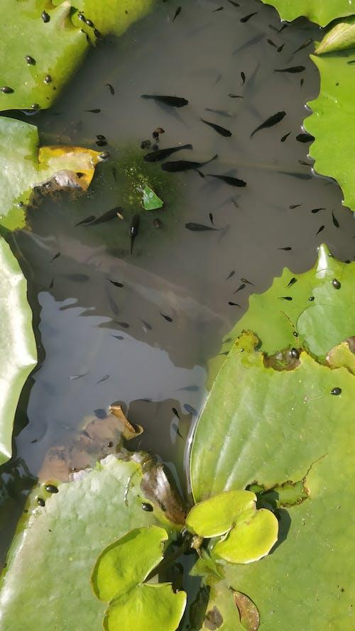 Základová fotografie zdarma na téma ryba, rybník