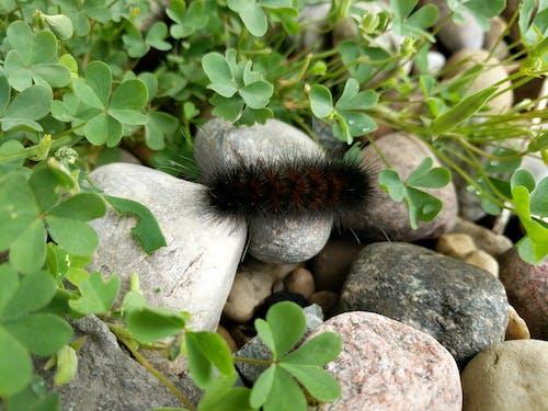 바위, 애벌레, 클로버, 흐린의 무료 스톡 사진