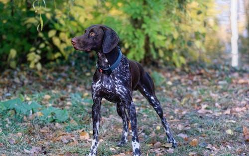 Darmowe zdjęcie z galerii z mały, opadłe liście, patrzący, pies
