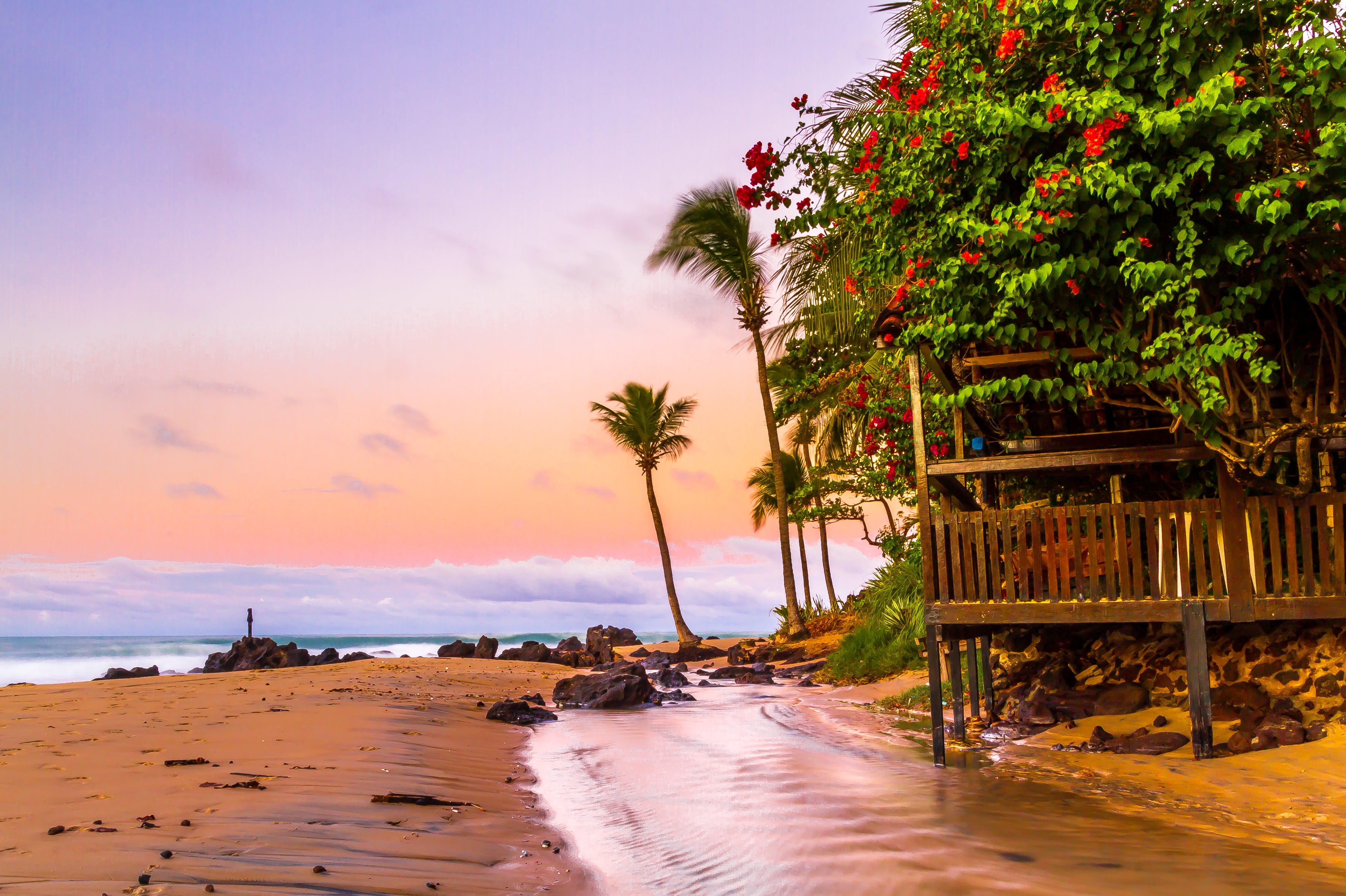 Безкоштовне стокове фото на тему «берег, берег моря, дерева, море»