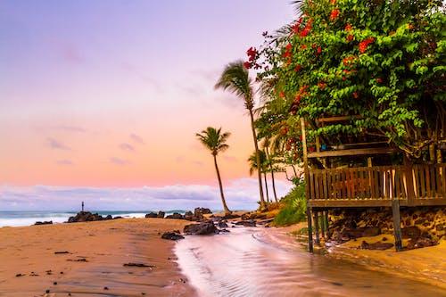 Green Coconut Trees On Seashore