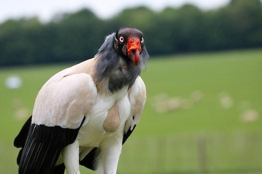 White Black and Orange Bird Selective Focus Photography